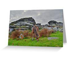 Dartmoor: Pony at Pew Tor Greeting Card