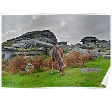 Dartmoor: Pony at Pew Tor Poster