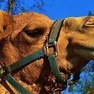 Camel Puss by Eileen Brymer