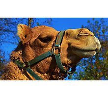 Camel Puss Photographic Print