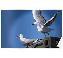 Comical Gulls Poster