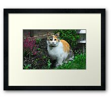Guest Cat Framed Print