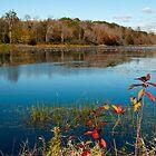 Autumn Pond by Tom Allen