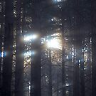 Miracle light and darkness .Forest mornning wonders . (Poland) by Brown Sugar. Favorites: 4 Views: 381 .thx! by © Andrzej Goszcz,M.D. Ph.D