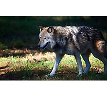 Colorful Wolf Photographic Print
