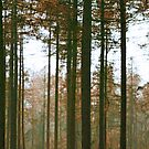 Forest Lines by GlennB