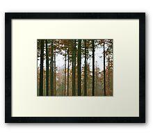 Forest Lines Framed Print