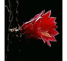 Wild Fractal Refractory Flower Photographic Print