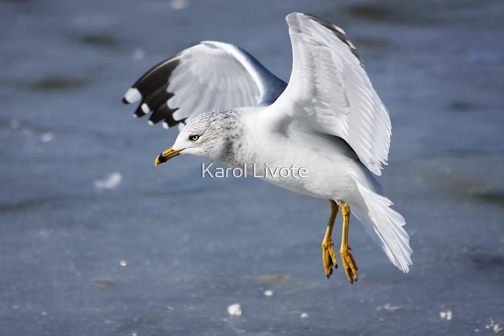 Angel Wings by Karol Livote