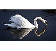 The white swan Photographic Print