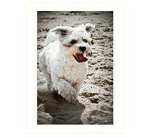 Mollie at the beach Art Print