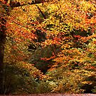 Entrance to Autumn by Sandy Woolard