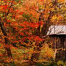 Crossing Into Autumn by Sandy Woolard