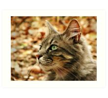 Cat Contemplation Art Print