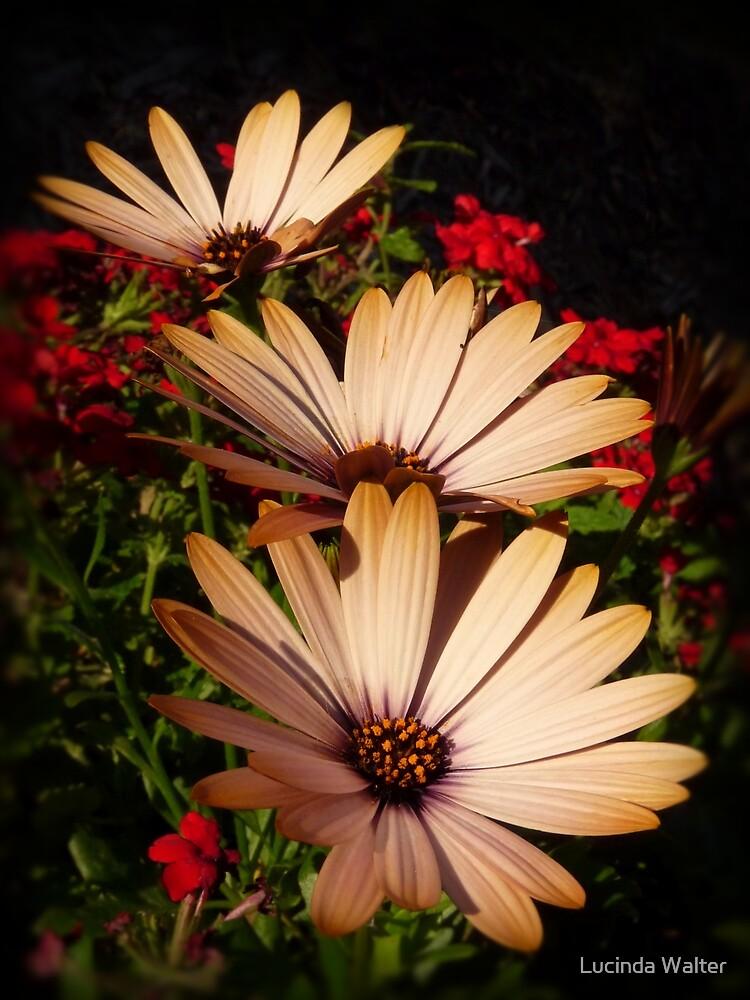Fall Garden by Lucinda Walter
