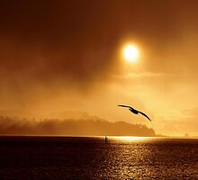 STORM RIDER~ by RoseMarie747