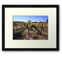 Sunlit Vines Framed Print