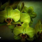 Orchid Still Life by Mattie Bryant
