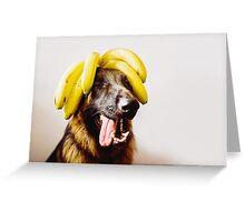 Bananas! German shepherd with bananas on head Greeting Card