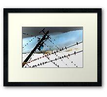 Bird Life ~ A series: cross communication Framed Print