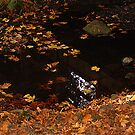 Leaves On A Woodland Pond by Jann Ashworth