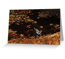 Leaves On A Woodland Pond Greeting Card