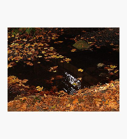 Leaves On A Woodland Pond Photographic Print