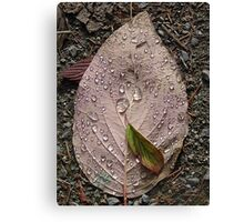 Raindrops On a Leaf Canvas Print