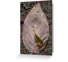 Raindrops On a Leaf Greeting Card