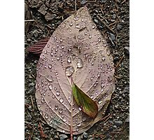 Raindrops On a Leaf Photographic Print