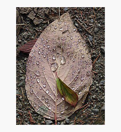 Raindrops On a Leaf Photographic Print