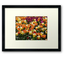 A Tulip Display Framed Print