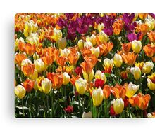 A Tulip Display Canvas Print