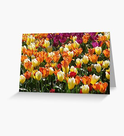 A Tulip Display Greeting Card