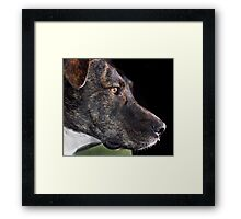 With the 999 plan how many bones can I save? Framed Print