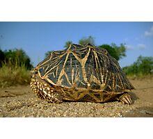 Star Tortoise - Sri Lanka Photographic Print