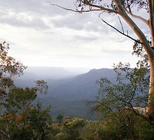 Blue Mountains by Jessica Fittock