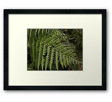 Woodland Fern in October Framed Print