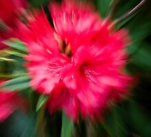 Rhododendron by ChrisNZ