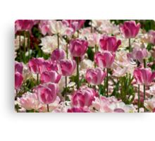 Pink & White Tulips Canvas Print