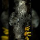 Optimisticly Dense Daisies © Vicki Ferrari Photography by Vicki Ferrari