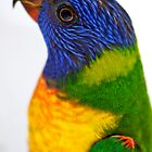 Rainbow Lorikeet by Renee Hubbard Fine Art Photography