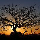 Sunset - White Cliffs NSW Australia by Bev Woodman