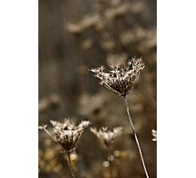 Dried Up Wildflowers Photographic Print