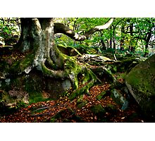 Ancient Woodland Photographic Print