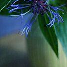 blue & still by Iris Lehnhardt