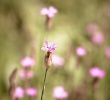 meadow by dpbphotography