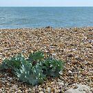 Alone on the beach by Ian Ker
