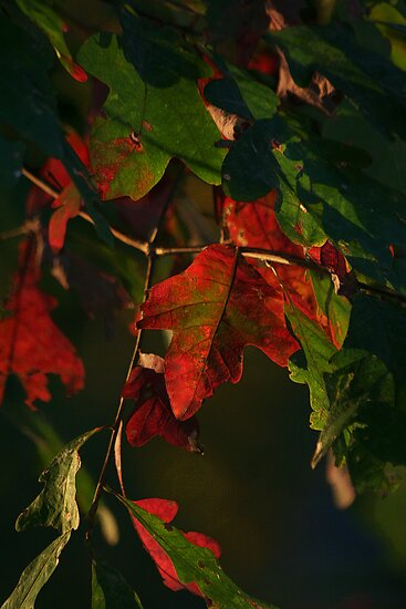 An Oak Leaf by Eileen McVey