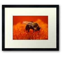 Sleeping Bee Framed Print
